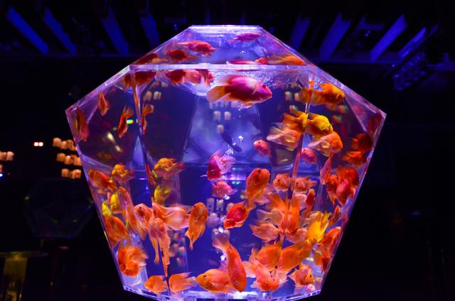 5千匹の金魚が泳ぐ「アートアクアリウム展」東京・日本橋で開催の画像