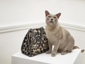 ステラ マッカートニー、猫モチーフが中心の限定ストアを阪急うめだに