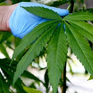 タイの医療用大麻合法化により全てが変わる?