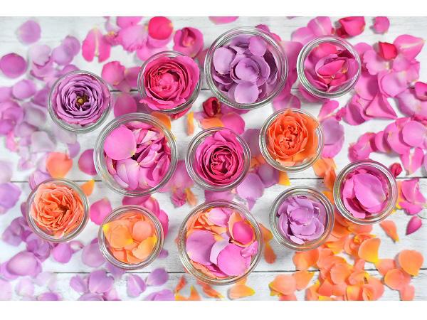 ice-rose-20170618_003.jpg